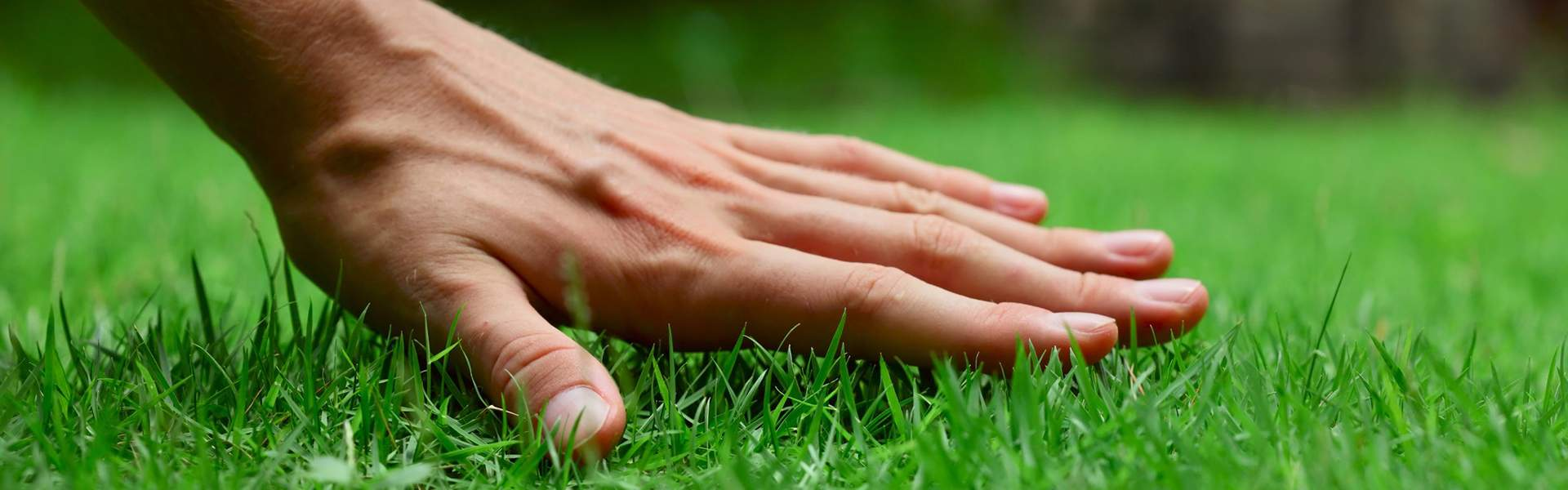 Eine Hand streicht über den Rasen
