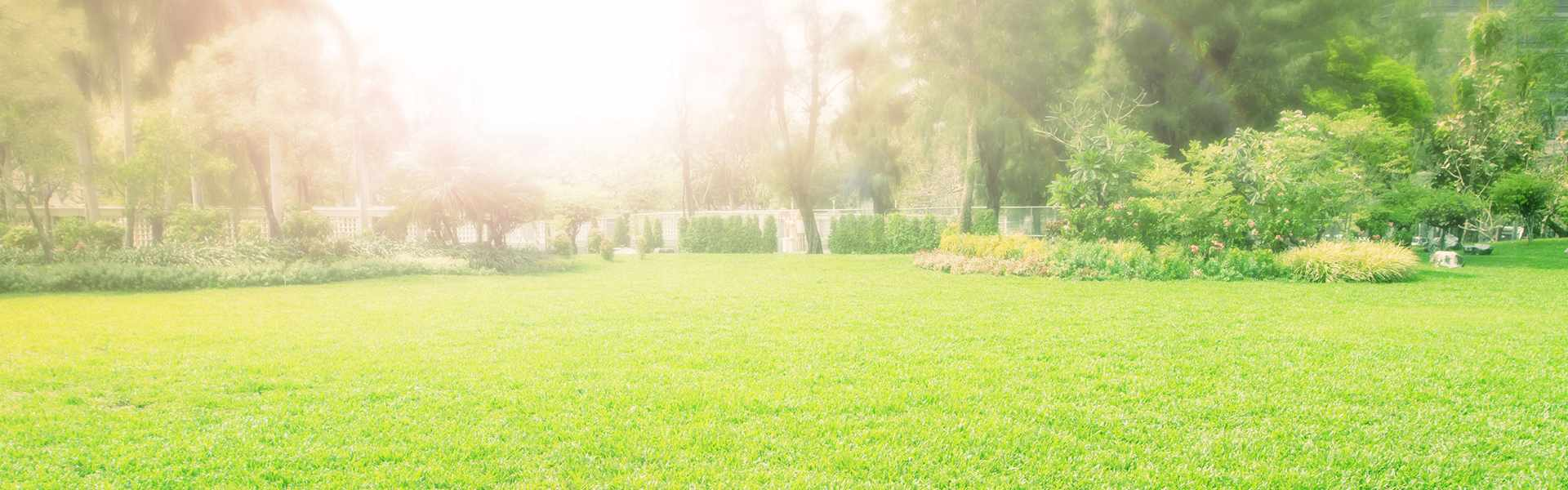 Ein Park mit schönem Rasen