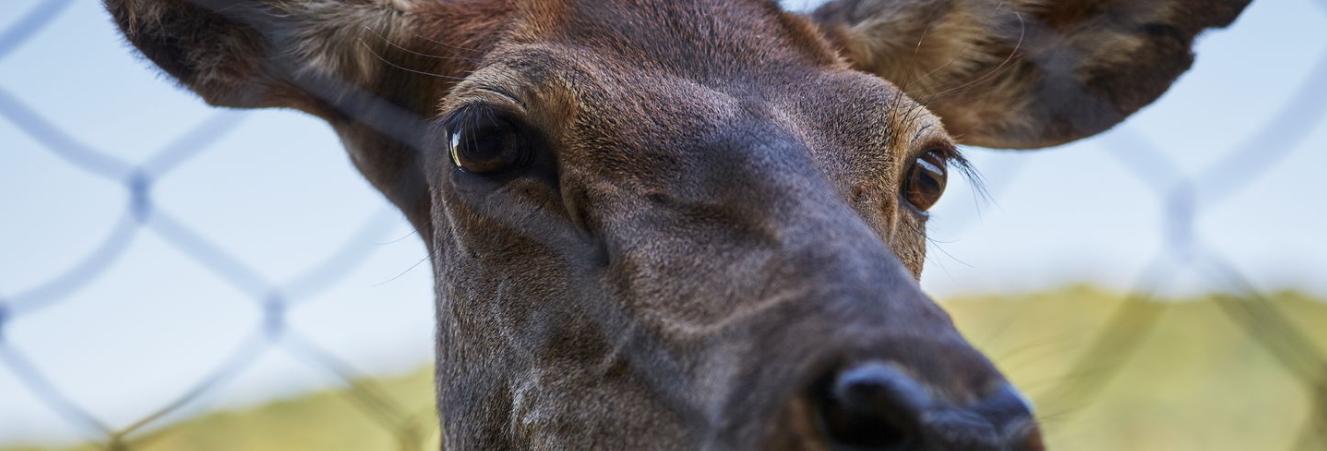 Wildtiere werden durch Wildschutzzäune geschützt.