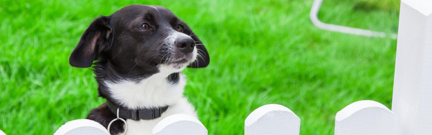 Nett Moderner Draht Hundezaun Bilder - Die Besten Elektrischen ...