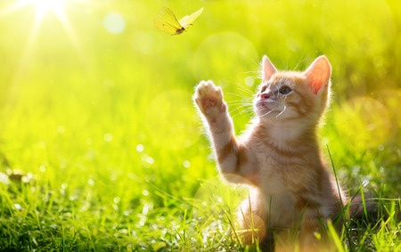 Katzenzaun Schutz Ihrer Katzen Zaunsysteme Direktde