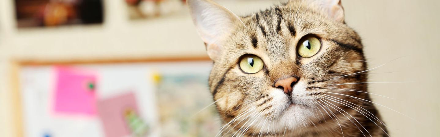Katze guckt süß