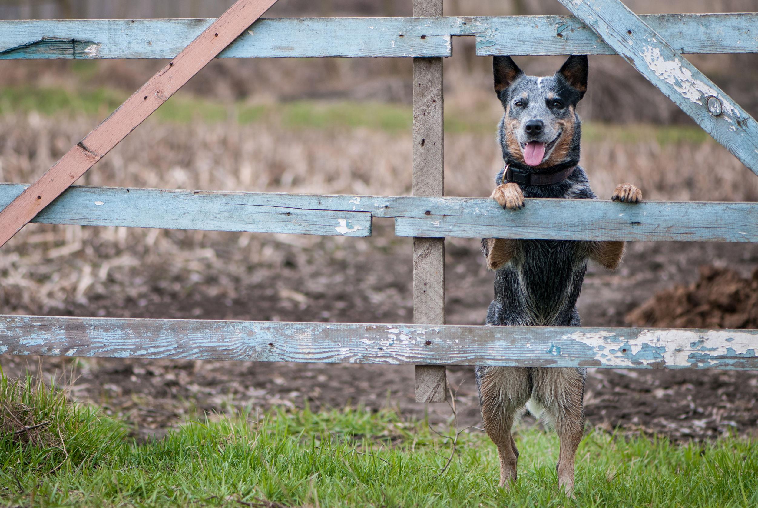 Zaun mit Hund