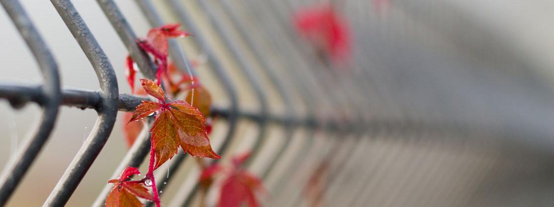 Ein Doppelstabzaun mit roten Blättern